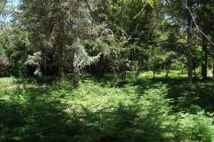 22 Bosque